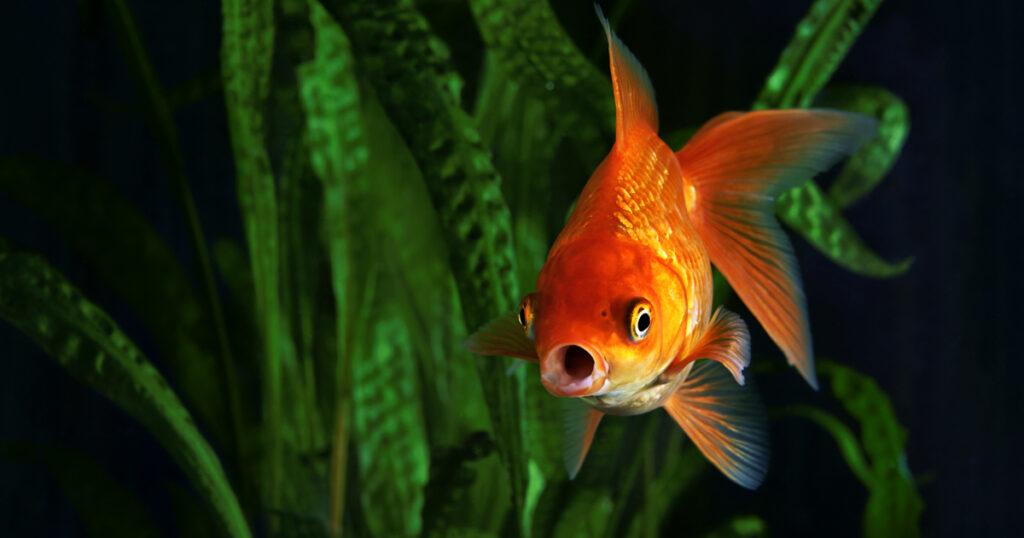 EFA Fish welfare campaign