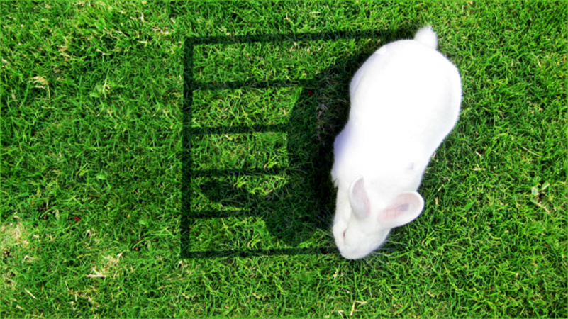 image of a bunny in cage