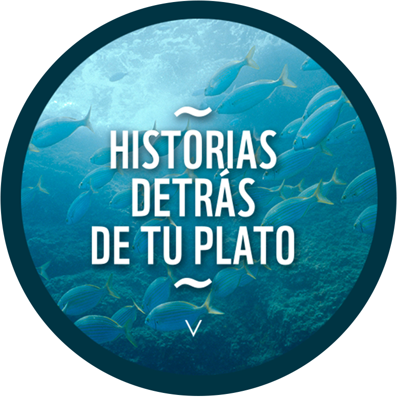image round plate wwf website sea food guide