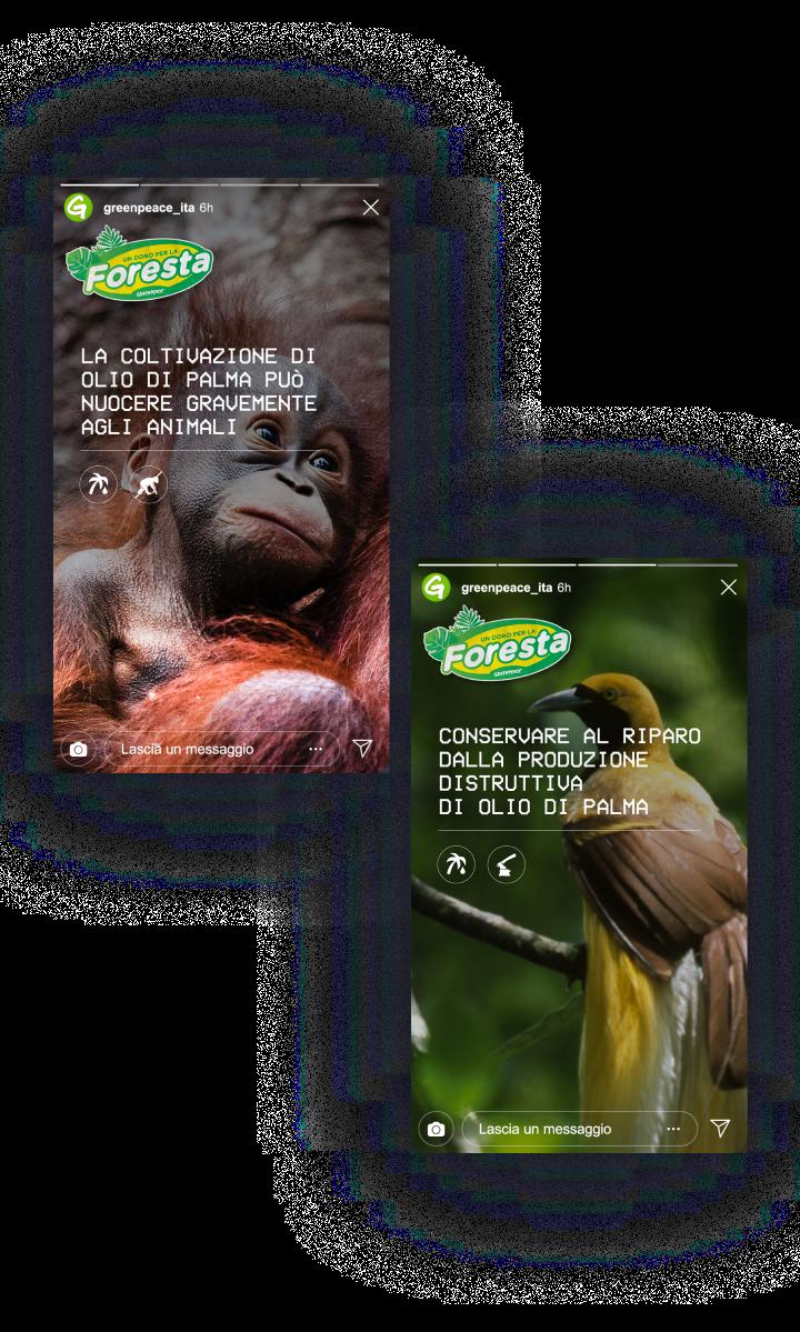 IG stories_mobile_GPforesta